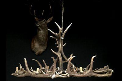 Le corna di cervo: non solo un dettaglio da parete